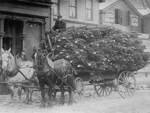 Ben Hudson-Johansen transporting Christmas trees